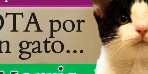 Cansado de votar por ratas? VOTA por un gato! Tired of voting for rats? Vote for a cat!