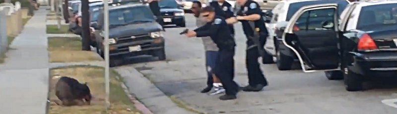 Police Shoot Dog after they Arrest Man for shooting video of them.